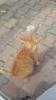 kedi tekmelemek
