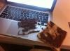 nutella sürülü ekmeği laptopa düşürmek