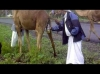 deve sidiği