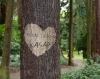 ağaca isim kazımak