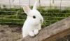 odun alevi ile kızaran tavşan eti
