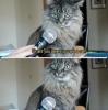 memleket batarken kedi fotosu paylaşmak
