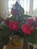 sözlük kızlarına çiçek alıyoruz kampanyası