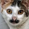 son feci kedi kimdir sorunsalı