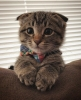 bir insan neden kedi sever sorunsalı