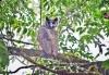 150 yıldır görülmeyen dev baykuş