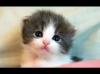 kedi fotoğrafı atınca artıların şelale olması