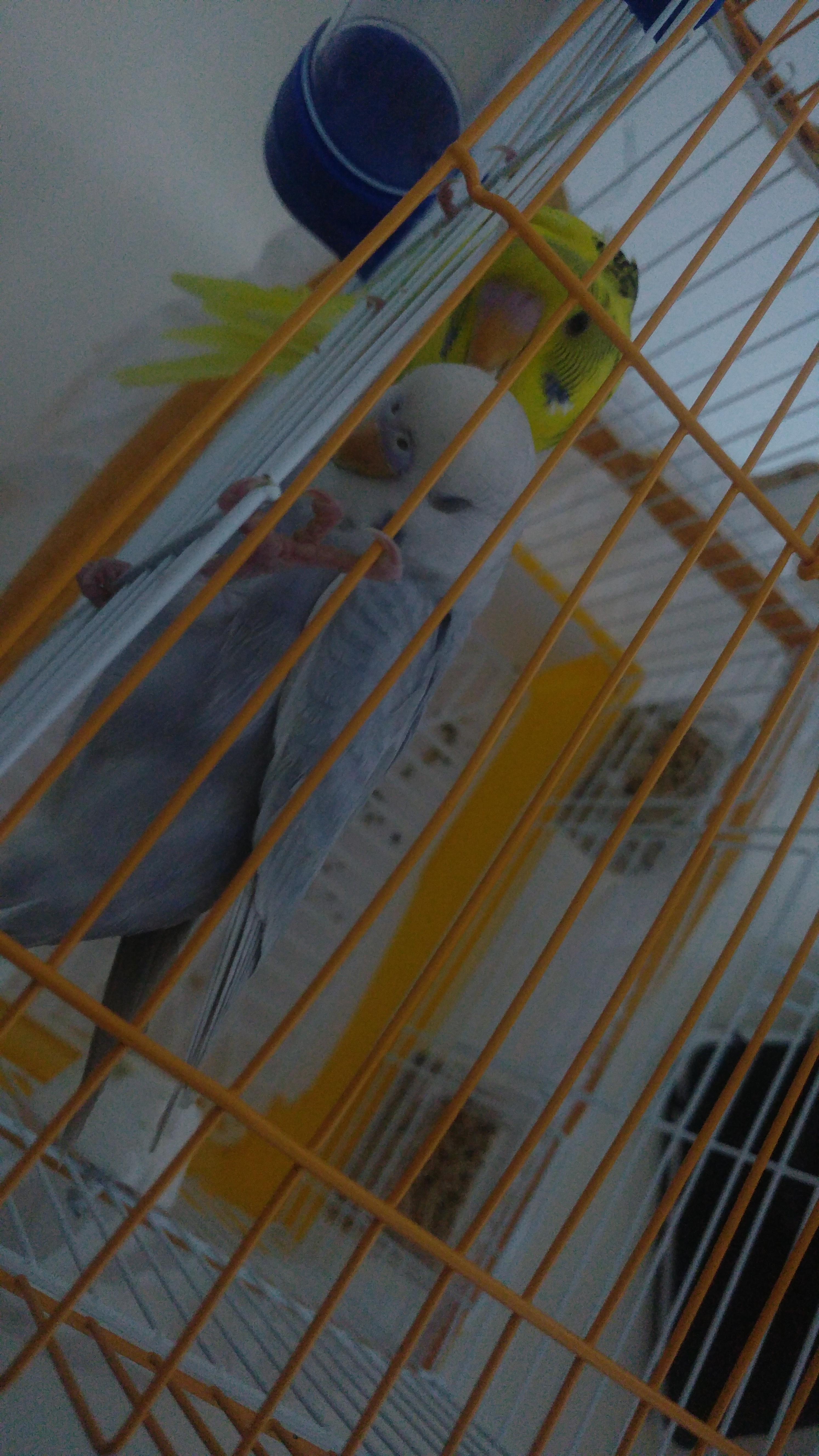 sözlük yazarlarının kuşları
