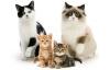 kedilerin sevimliliği