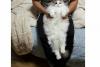 kedilerin sevimsiz olduğu gerçeği