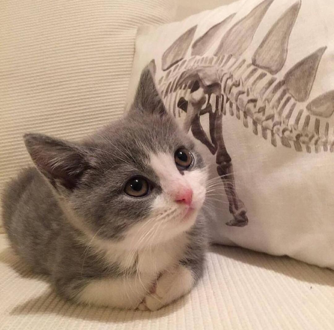 sözlüğün en yakışıklı erkeğinin küçüklük fotoğrafı