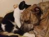 kedilerinbabasi57 ve katilll karşılaşsa olacaklar