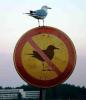 yasaklar içinde isyan saklar