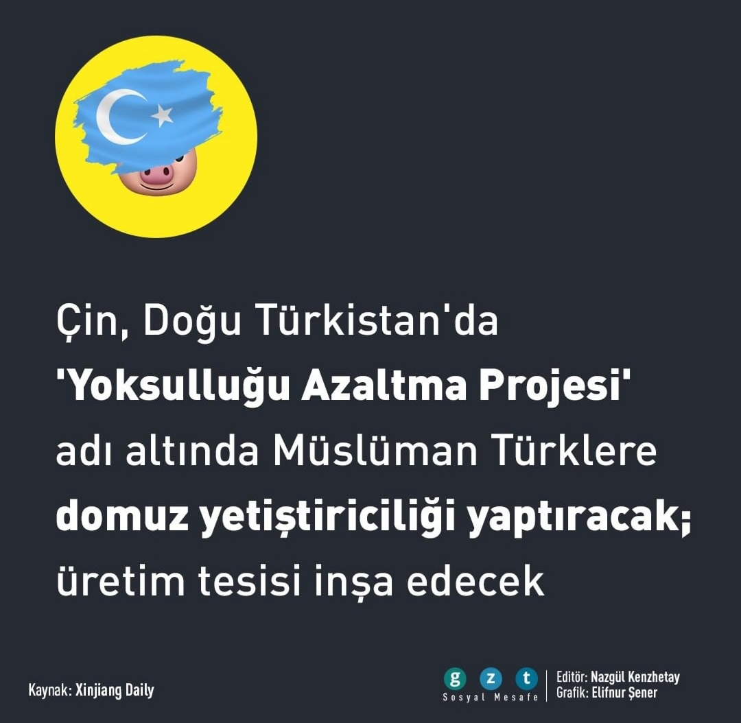 çinin d türkistan da domuz yetiştiriciliği yapması