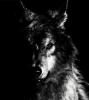 en karizmatik hayvan