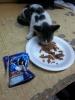 sokak kedisi beslemek
