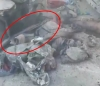 tc nin sivilleri vurması
