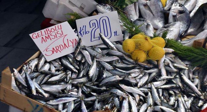 yeni bir balık türü olan amsi balığı