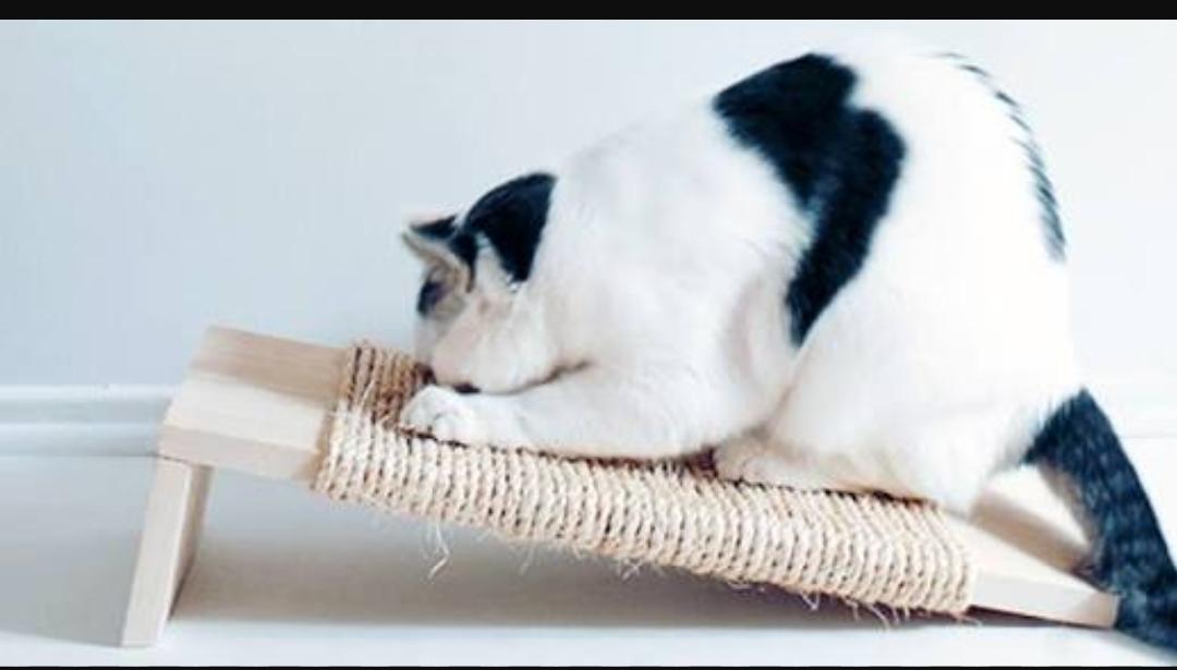 kediyi tirmalama tahtasina alistirmak