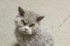 kedi fotoları paylaşımının yasaklanması
