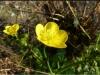 mayıs çiçeği