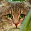 kedi olsam beni sever miydiniz