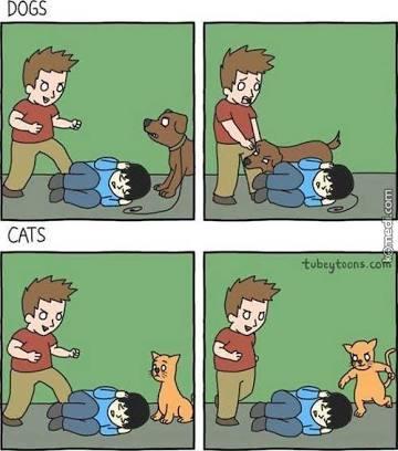 köpekler dururken kedilerin sevilmesi