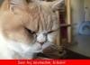 sevgilinin kedisiyle anlaşamamak